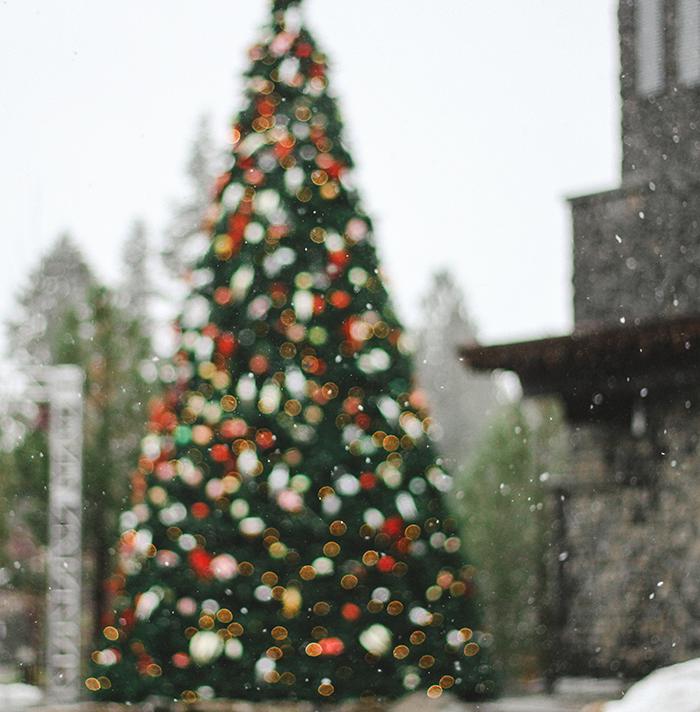 christbaum kaufen rosenheim